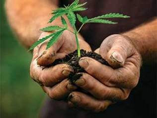Staying Ahead of the Hemp Curve with Sovereign Fields